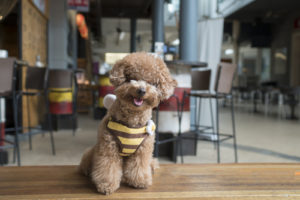 dog friendly restaurants in Bradenton