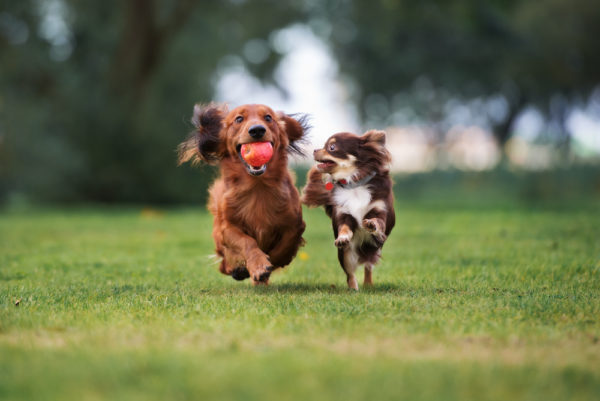 dog parks in lakewood ranch