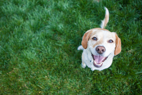 dog parks in bradenton